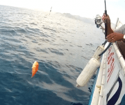 Dalyan Sea Fishing - 10
