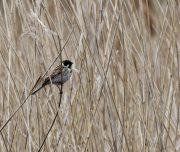 Volkan's Adventures Bird Watching Trip - 12