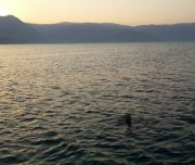 Dalyan Moonlight Boat Trip - Swimming as the sun sets