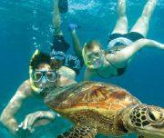 Dalyan Snorkelling - swimming with Caretta