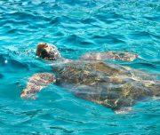 Dalyan Snorkelling - Caretta