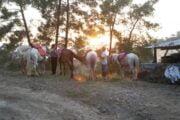 Dalyan Horse Riding Safari 6