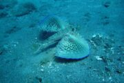 Diving in Dalyan 7