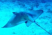 Diving in Dalyan 6