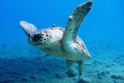 Diving in Dalyan 11