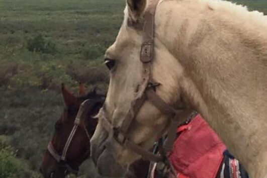 Dalyan Sunset Horse Safari - Rahman Horses