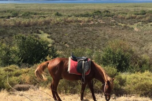 Dalyan Sunset Horse Safari - Rahman horses resting