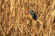 Volkan's Adventures Bird Watching Trip - 9