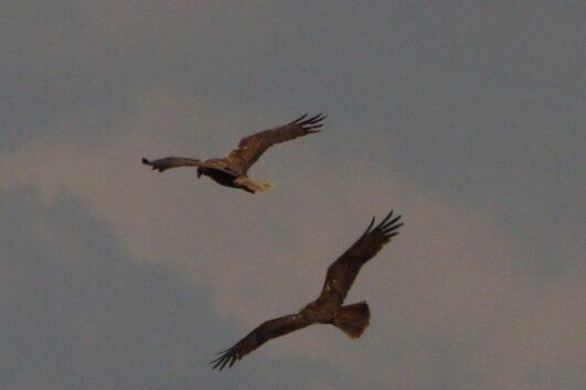 Volkan's Adventures Bird Watching Trip - 11