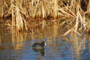 Volkan's Adventures Bird Watching Trip - 6
