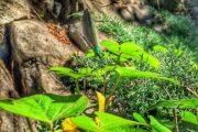 Botanical Gardens - 2