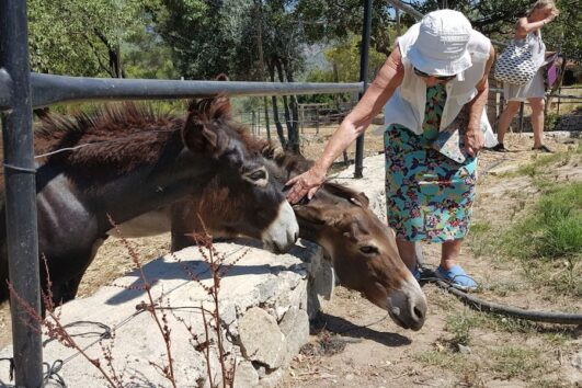 Mules and Donkeys in the Paddock