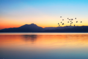 Beautiful sunset and birds flying