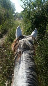 Riding along country lanes
