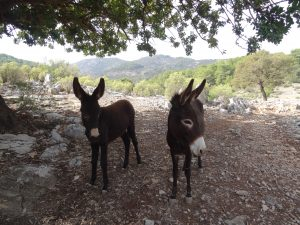 Locals donkeys