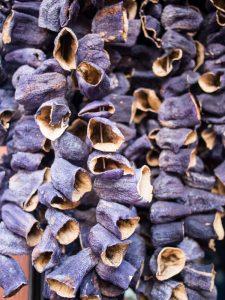Dried shells