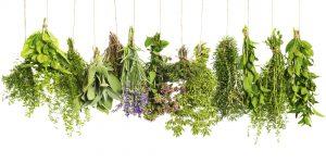 Borek- herbs
