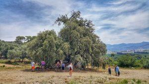 Ancient Trees - Wishing tree