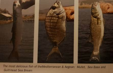 Mullet, Sea Bass, Sea Bream