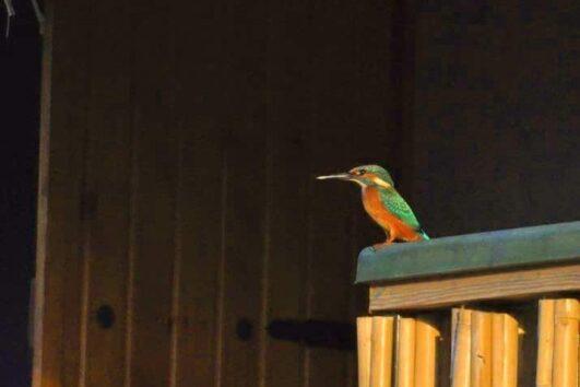 Dalyan Kingfisher Restaurant - dalyan Yalicapkini Restaurant - 17