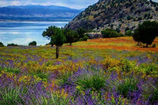 Lisinia project - burdur lavender fields - Saggalassos - 53