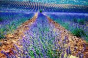 Lisinia project - burdur lavender fields - Salda Lake - 18