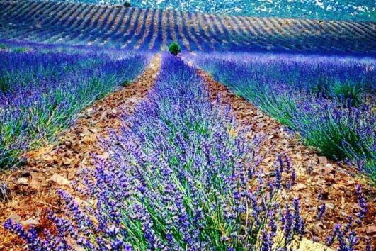 Lisinia project - burdur lavender fields - Salda Lake - 18
