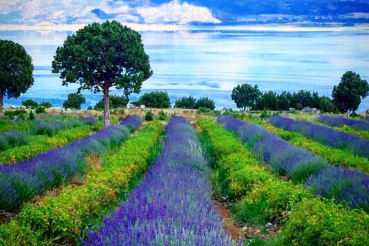 Lisinia project - burdur lavender fields - Saggalassos - 60