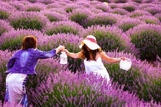 Lisinia project - burdur lavender fields - Salda Lake - 1