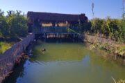 Dalyan Kingfisher Restaurant - dalyan Yalicapkini Restaurant - 4