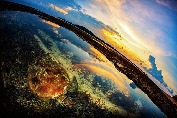The Life Cycle of Caretta Caretta Sea Turtles