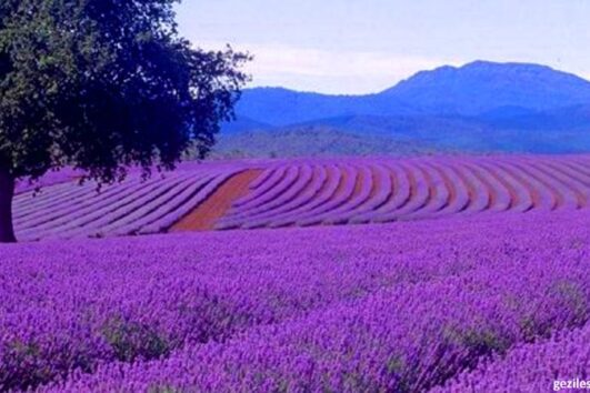 Lisinia project - burdur lavender fields - Salda Lake - 28