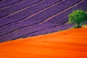 Lisinia project - burdur lavender fields - Salda Lake - 45