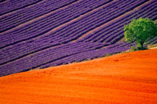 Lisinia project - burdur lavender fields - Salda Lake - 45