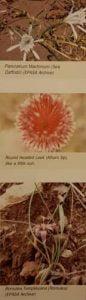 Dalyan's flowers