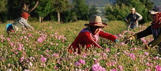 Lisinia project - burdur lavender fields - Salda Lake - 27