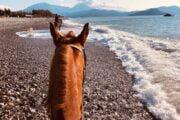 Volkan's Adventures Dalyan - Swimming With Horses - 28