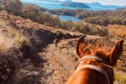 Volkan's Adventures Dalyan - Swimming With Horses - 22