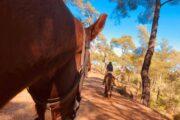 Volkan's Adventures Dalyan - Swimming With Horses - 21