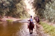 Volkan's Adventures Dalyan - Swimming With Horses - 19