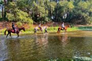 Volkan's Adventures Dalyan - Swimming With Horses - 18