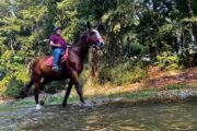 Volkan's Adventures Dalyan - Swimming With Horses - 17