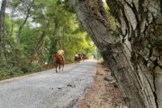 Volkan's Adventures Dalyan - Swimming With Horses - 16