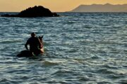 Volkan's Adventures Dalyan - Swimming With Horses - 35