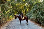 Volkan's Adventures Dalyan - Swimming With Horses - 15