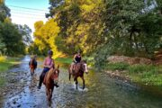 Volkan's Adventures Dalyan - Swimming With Horses - 13