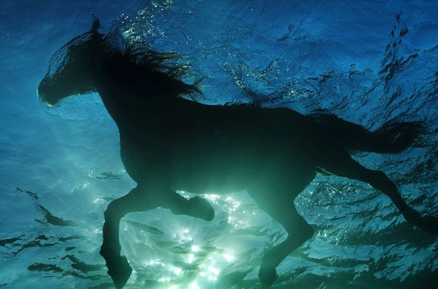 Volkan's Adventures Dalyan - Swimming With Horses - 73
