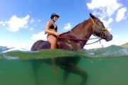 Volkan's Adventures Dalyan - Swimming With Horses - 71