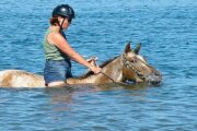 Volkan's Adventures Dalyan - Swimming With Horses - 70